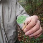 plantes sauvages stage de survie montagne
