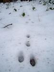 Trâces et indinces dans la neige
