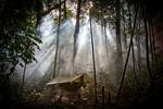camp de survie en jungle guadeloupe
