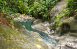 photo de la jungle en guadeloupe